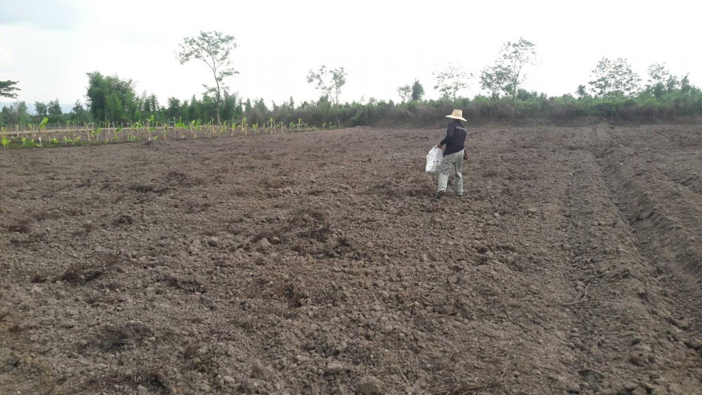 นางสุจินดา อิ่นคำ หน.สำนักปลัด รับมอบเมล็ดพันธุ์ต้นปอเทืองจากเจ้าหน้าที่สำนักงานพัฒนาที่ดินจังหวัดเชียงรายจำนวน 100 กิโลกรัม และส่งต่อให้เจ้าหน้าที่ อบต.ดอยงาม นำไปหว่านภายในศูนย์เศรษฐกิจพอเพียงฯ เพื่อให้เป็นปุ๋ยพืชสดในการทำนา ทำสวนครั้งต่อไป...